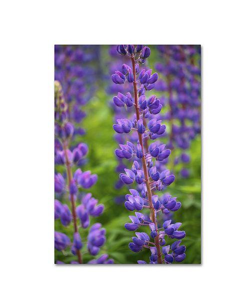 "Trademark Global Cora Niele 'Blue Violet Lupine Flower' Canvas Art - 24"" x 16"" x 2"""