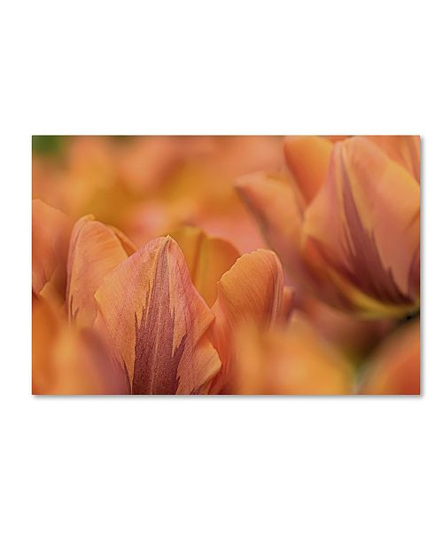 "Trademark Global Cora Niele 'Orange Tulips' Canvas Art - 24"" x 16"" x 2"""