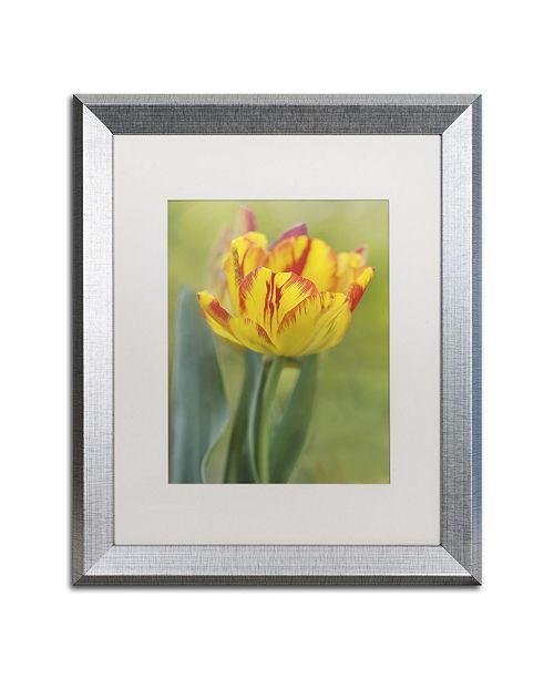 "Trademark Global Cora Niele 'Rembrandt Tulip' Matted Framed Art - 20"" x 16"" x 0.5"""