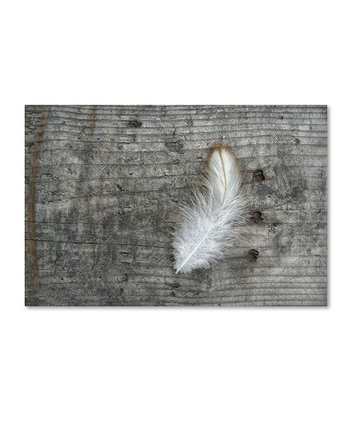 """Trademark Global Cora Niele 'Feather on Rough Wood' Canvas Art - 24"""" x 16"""" x 2"""""""