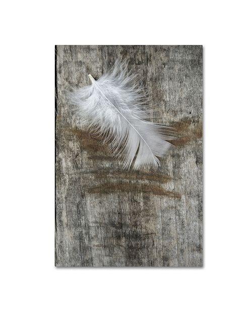 "Trademark Global Cora Niele 'White Feather on Wood' Canvas Art - 24"" x 16"" x 2"""