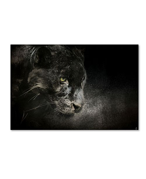 "Trademark Global Jai Johnson 'Out Of The Shadows Black Leopard' Canvas Art - 47"" x 30"" x 2"""
