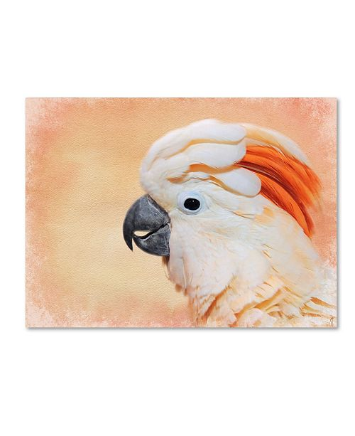 "Trademark Global Jai Johnson 'Salmon Crested Cockatoo Portrait 1' Canvas Art - 24"" x 18"" x 2"""
