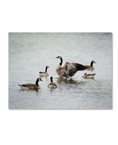 "Trademark Global Jai Johnson 'Show Off Canadian Geese' Canvas Art - 32"" x 24"" x 2"""