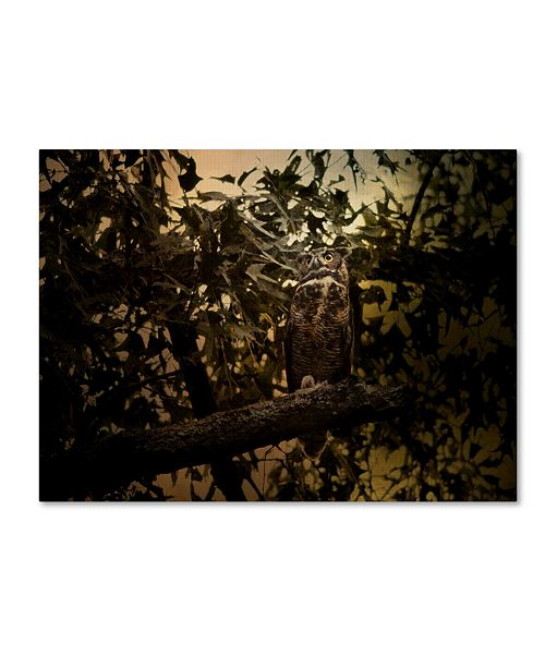 "Trademark Global Jai Johnson 'Night of The Owl 3' Canvas Art - 19"" x 14"" x 2"""