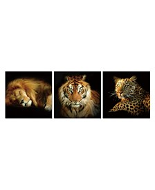 Chic Home Decor Wild Safari 3 Piece Wrapped Canvas Wall Art Felines