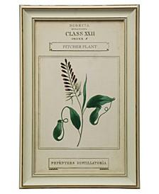 Botanical II Print Framed