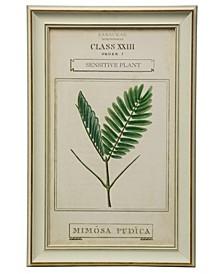 Botanical IV Print Framed