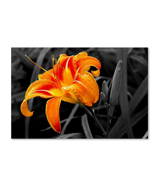 "Trademark Global The Lieberman Collection 'Orange Flower' Canvas Art - 24"" x 16"" x 2"""