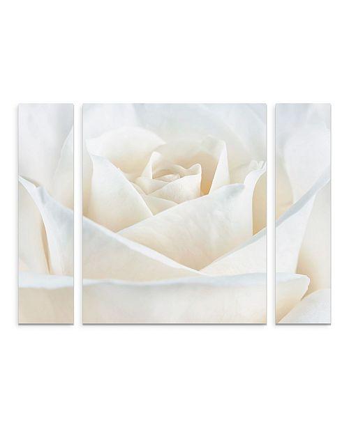 "Trademark Global Cora Niele 'Pure White Rose' Multi Panel Art Set Small - 24"" x 32"" x 2"""