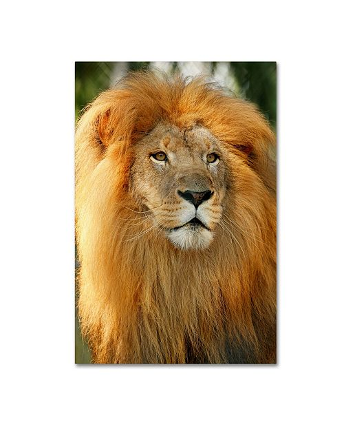 "Trademark Global Mike Jones Photo 'Lion' Canvas Art - 19"" x 12"" x 2"""