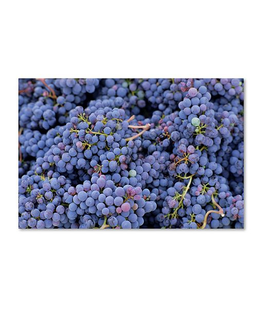 """Trademark Global Robert Harding Picture Library 'Grapes 2' Canvas Art - 24"""" x 16"""" x 2"""""""