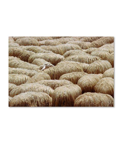 "Trademark Global Robert Harding Picture Library 'Sheep 2' Canvas Art - 19"" x 12"" x 2"""