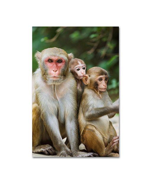 "Trademark Global Robert Harding Picture Library 'Monkey 2' Canvas Art - 24"" x 16"" x 2"""