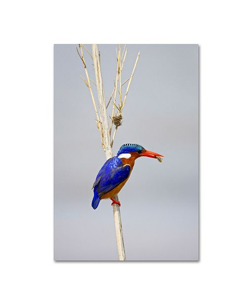 "Trademark Global Robert Harding Picture Library 'Small Blue Bird' Canvas Art - 24"" x 16"" x 2"""