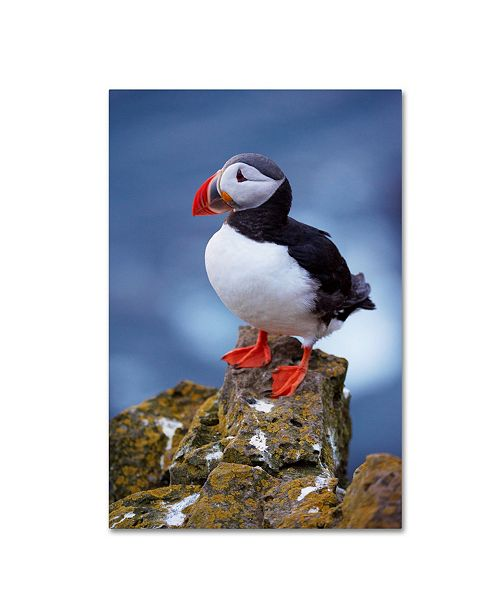 "Trademark Global Robert Harding Picture Library 'Birds' Canvas Art - 32"" x 22"" x 2"""