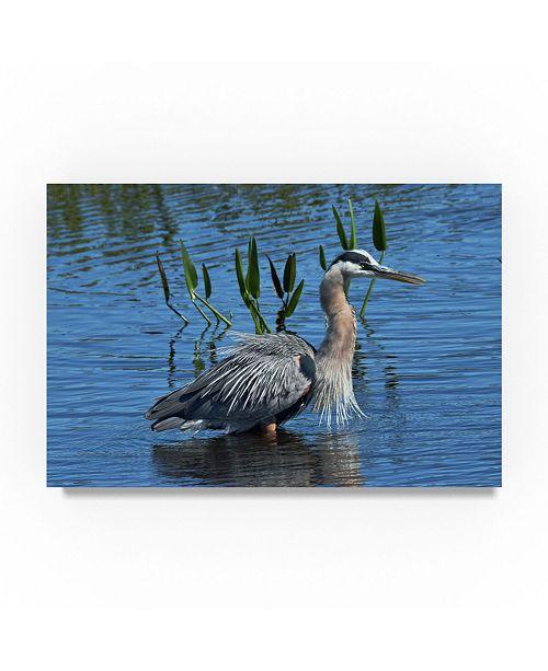 "Trademark Global Robert Michaud 'Great Blue Heron In Water' Canvas Art - 47"" x 30"" x 2"""