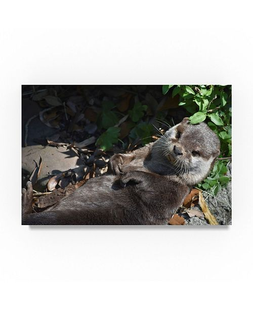 "Trademark Global Robert Michaud 'Otter' Canvas Art - 24"" x 16"" x 2"""