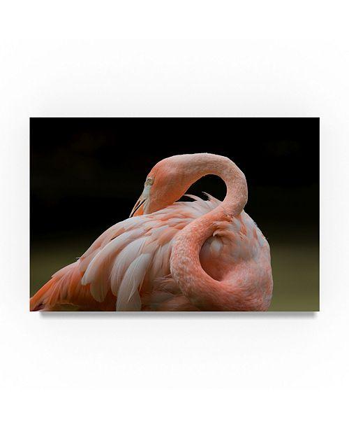 "Trademark Global Robert Michaud 'Pink Flamingo' Canvas Art - 19"" x 12"" x 2"""