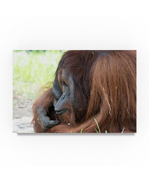 "Trademark Global Robert Michaud 'Orangutan' Canvas Art - 24"" x 16"" x 2"""