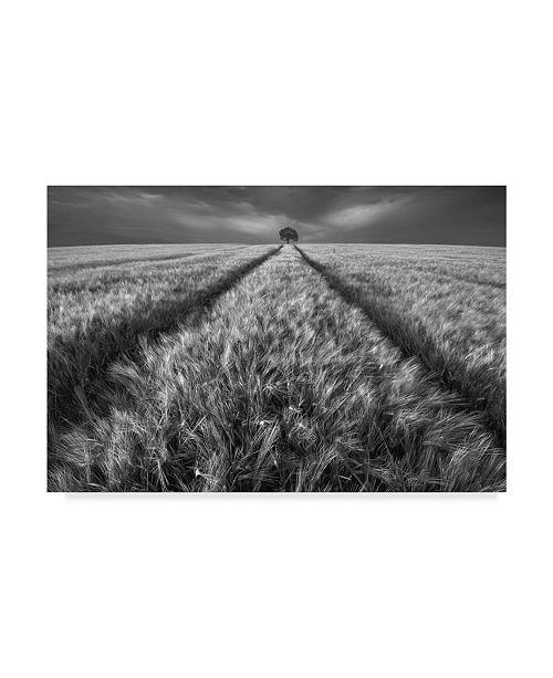 "Trademark Global Piotr Krol 'Alone In The Grass' Canvas Art - 32"" x 2"" x 22"""