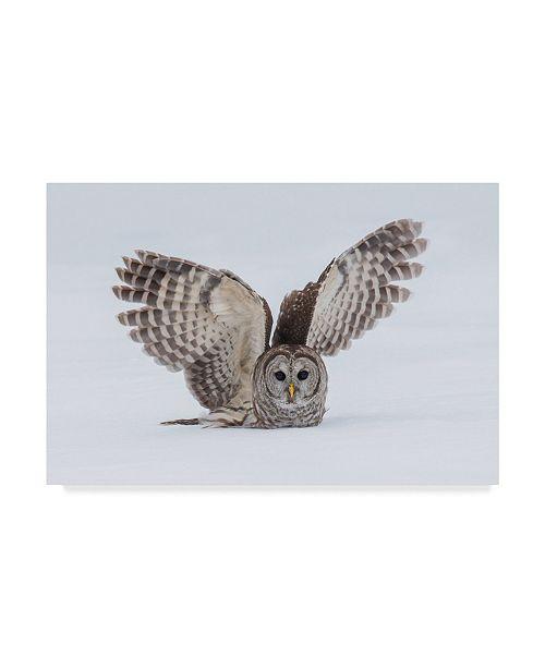 "Trademark Global Salman A 'How Do You Like My Wings' Canvas Art - 24"" x 2"" x 16"""