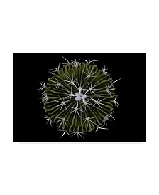 "Victor Mozqueda 'Steno Cactus' Canvas Art - 19"" x 2"" x 12"""