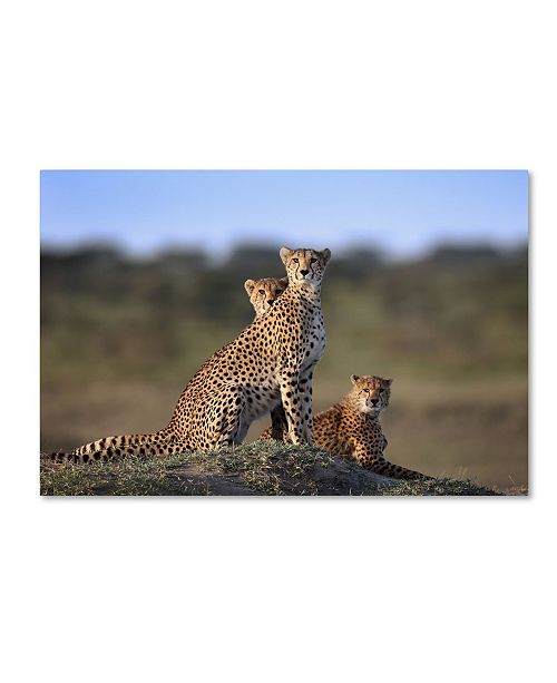 "Trademark Global Sultan Sultan Al 'Cheetahs Family' Canvas Art - 32"" x 22"" x 2"""