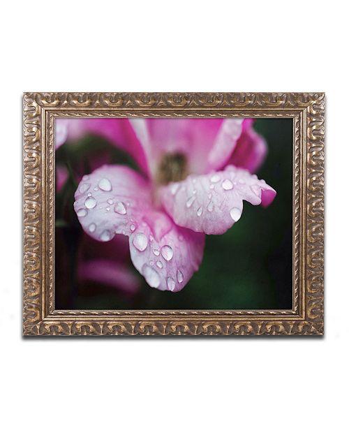 """Trademark Global PIPA Fine Art 'Raindrops on Wild Rose Color' Ornate Framed Art - 16"""" x 20"""""""