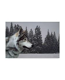 """Ron Parker 'Wolf Portrait' Canvas Art - 16"""" x 24"""""""