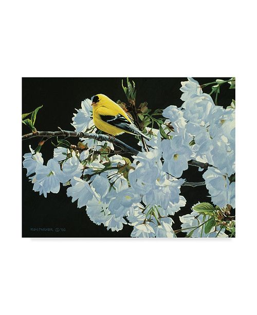 """Trademark Global Ron Parker 'Goldfinch And Blossoms' Canvas Art - 18"""" x 24"""""""