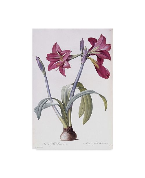 "Trademark Global Pierre-Joseph Redoute 'Amaryllis Brasiliensis' Canvas Art - 16"" x 24"""