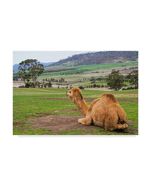 """Trademark Global Incredi 'Camel And His View' Canvas Art - 24"""" x 16"""""""