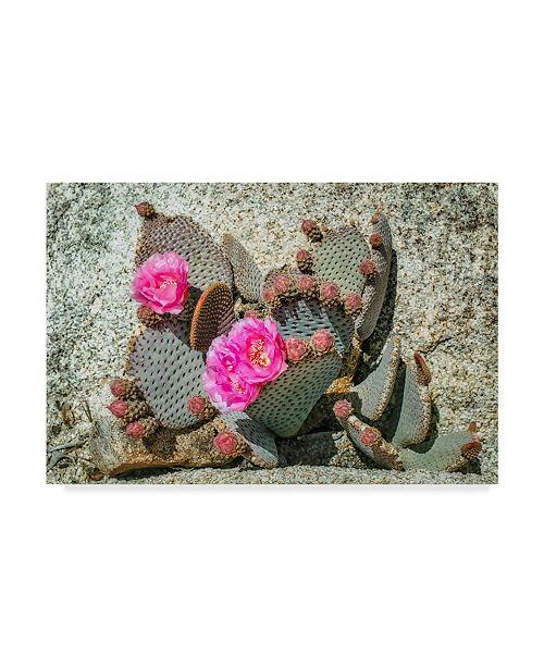 "Trademark Global Janice Sullivan 'Pink Desert Flower' Canvas Art - 19"" x 12"""