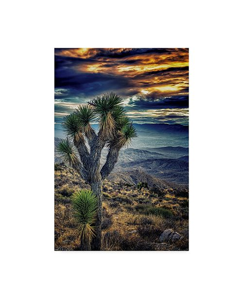 "Trademark Global Janice Sullivan 'Joshua Tree Sunset I' Canvas Art - 16"" x 24"""