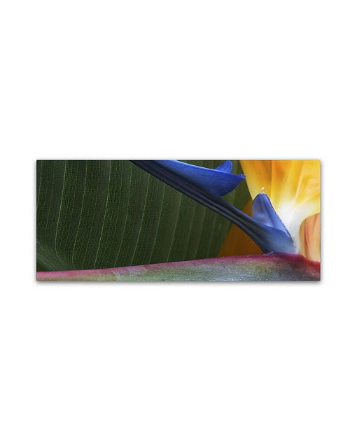 """Trademark Global Kurt Shaffer 'Bird of Paradise Abstract' Canvas Art - 20"""" x 47"""""""