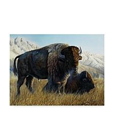"""Rusty Frentner 'Resting Buffalo' Canvas Art - 35"""" x 47"""""""