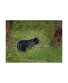 "Galloimages Online 'Black Bear Sow Watching Cubs' Canvas Art - 32"" x 24"""
