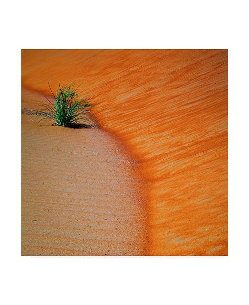 "Trademark Global Jason Matias 'Liwa Sands S Curve Square' Canvas Art - 35"" x 35"""