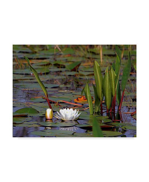 "Trademark Global J.D. Mcfarlan 'Water Lily Float' Canvas Art - 32"" x 24"""