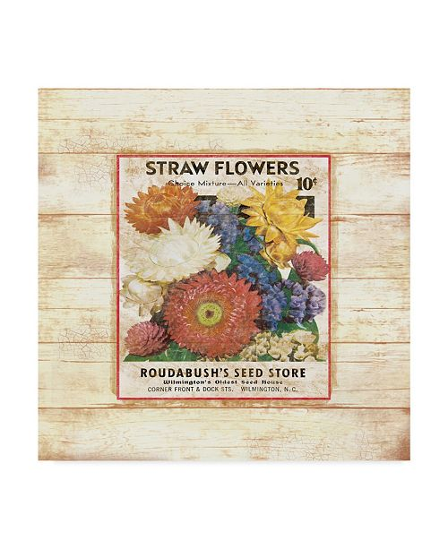 """Trademark Global Jean Plout 'Straw Flowers On Wood 2' Canvas Art - 35"""" x 35"""""""