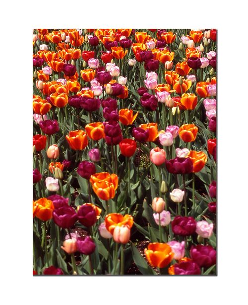 "Trademark Global Multi-Colored Tulips by Kurt Shaffer Canvas Art - 32"" x 24"""
