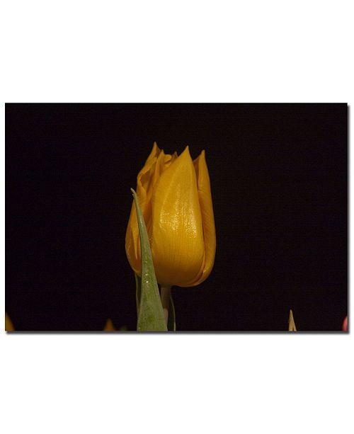 "Trademark Global Martha Guerra 'Yellow Tulips VI' Canvas Art - 24"" x 16"""