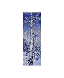 """Jeff Tift 'Blue Jay' Canvas Art - 10"""" x 32"""""""