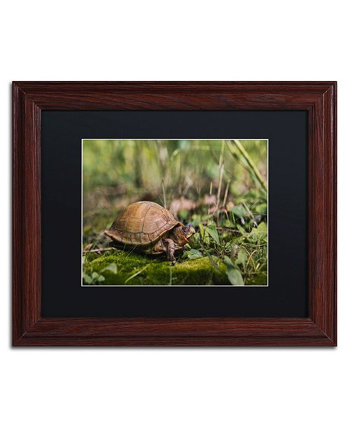 "Trademark Global Jason Shaffer 'Box Turtle' Matted Framed Art - 14"" x 11"""