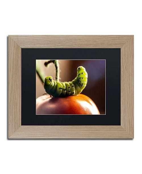 "Trademark Global Jason Shaffer 'Caterpillar & Tomato' Matted Framed Art - 14"" x 11"""