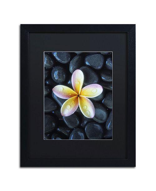 "Trademark Global David Evans 'Plumeria & Pebbles 3' Matted Framed Art - 16"" x 20"""