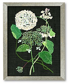 Hydrangea Study I Framed Canvas Wall Art Collection