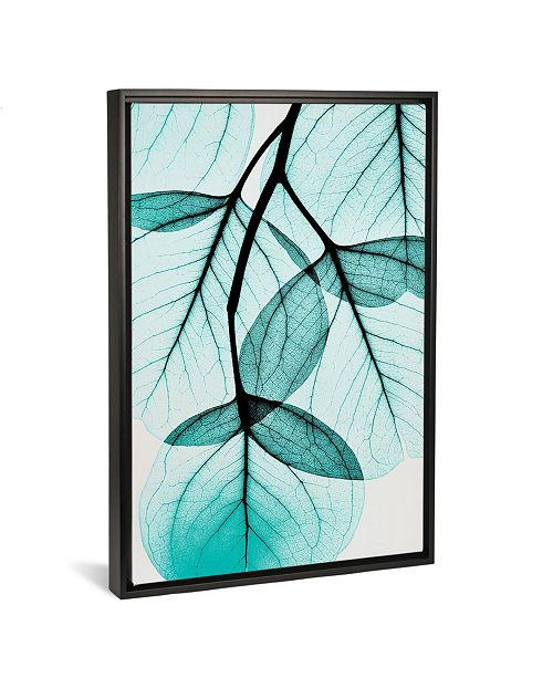 "iCanvas Teal Eucalyptus by Albert Koetsier Gallery-Wrapped Canvas Print - 26"" x 18"" x 0.75"""