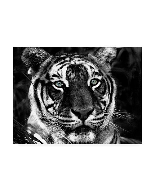 "Trademark Global Dana Brett Munich The Observer Black & White Canvas Art - 36.5"" x 48"""